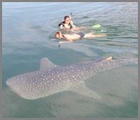 200-Shark1