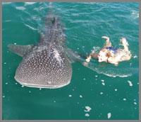 200-Shark6