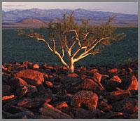 200-Tree