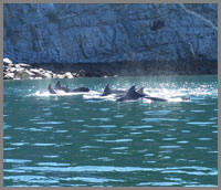 Sea of Cortez Dolphins and baja whale watching