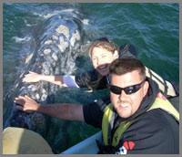 Baja whale watching and petting whales