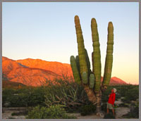 baja nature tours in the Midriff Islands