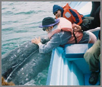 baja whale watching and petting
