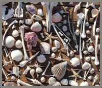 Sea of Cortez beach shells near Las Animas Eco-Lodge