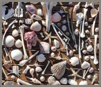 Sea of Cortez beach shells near Las Animas Eco-Lodge
