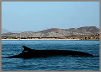 wellness-whale