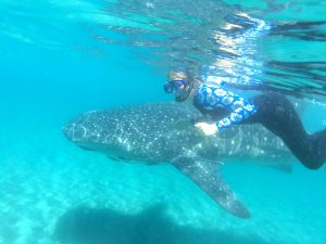 whale shark snorkeling with Ocean Institute