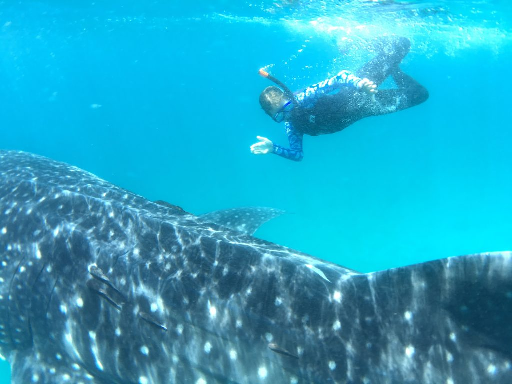 Baja Whale Sharks Tour Snorkeling Questions and Answers from 60 year Baja travel experts