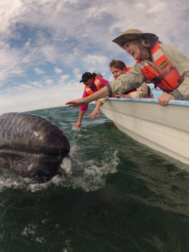 Nancy Caruso Baja Whale watching trips